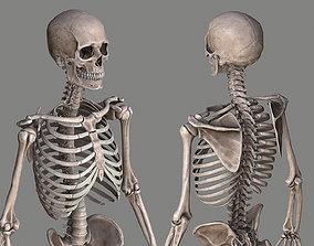 3D asset Human Skeleton Caucasian Male