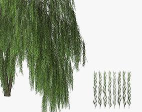 Willow tree 02 3D model