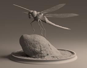 Dragon Fly 3D