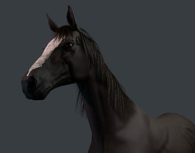 Thoroughbred Horse 3D model