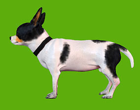 dog Chihuahua 3D