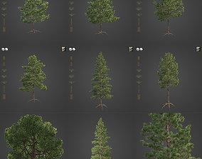 3D 2021 Ponderosa Pine Collection - Pinus Ponderosa