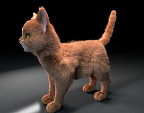 Cat Rigged Hair 3D model