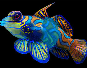 splendidus Tropical Fish 3D