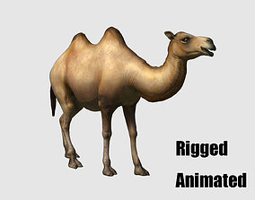 camel animation 3D