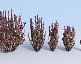 3D model 5 Japanese barberry Berberis thunbergii red