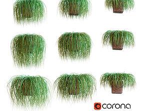 Hanging plants in wicker pot 9 models