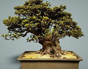 Bonsai Tree 3D asset low-poly