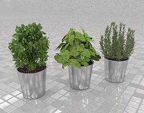3D model Culinary herbs