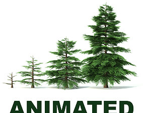 Fir tree - animation of growth 3D model animated