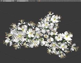 leaf 3D model Blossom of a Rowan High-Poly