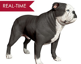 English Bulldog Real-Time 3D model