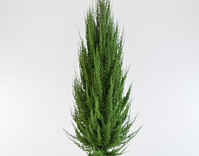 3D Juniper tree