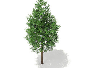 3D Norway Spruce Picea abies 2m
