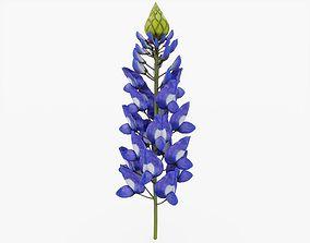 Bluebonnet Flower 3D