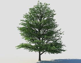 Deciduous tree 1 plant 3D model