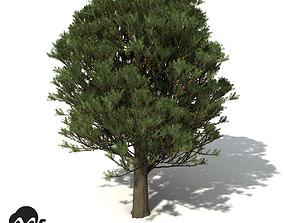 XfrogPlants Totara 3D model