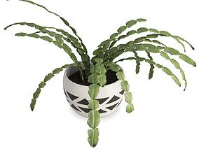 Succulent Plant Schlumbergera 3dvm 3D model