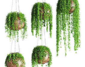 Hanging plants in pots 3D model