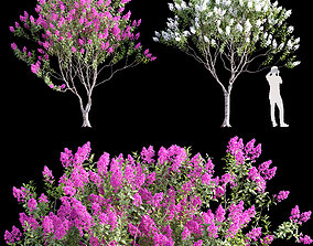Lagerstroemia - Crepe Myrtles 02 3D