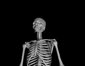 3D Male Skeleton Model - Human Skeleton 3D animated