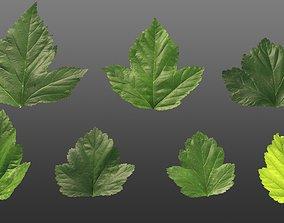 Natural tree leaf texture - Physocarpus 3D model