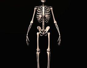 skeleton rig 3D asset