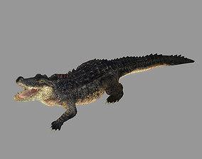 Crocodile Rigged Animated 3D model