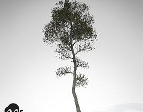 XfrogPlants Aleppo Pine 3D model