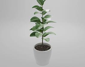 3D audrey Plant Ficus Audrey