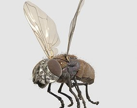 3D animated housefly