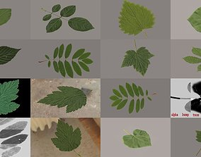 3D model Plant leaf collection