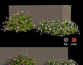 3D Plant flower set 15
