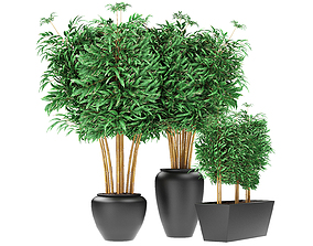 3D Bamboo Plants Exotic Plant