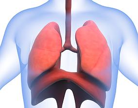 Human Respiratory System 3D asset
