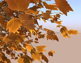 maple tree acer young autumn A 3D model