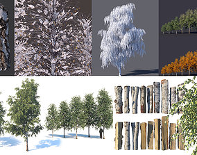 3D model Set of birches at different times of the year 2