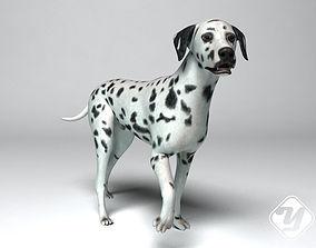 rigged Dalmatian Dog rigged model