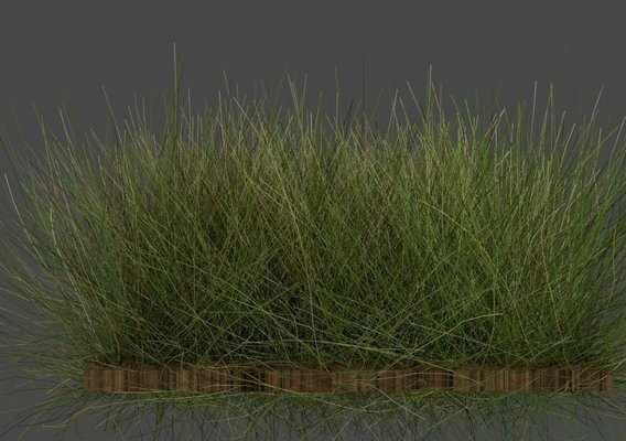 Real Grass
