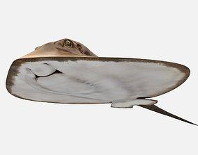 3D model Mobula Devil rays Flying rays Manta
