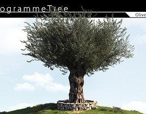 Olive Tree 04 3D model
