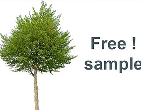 Free sample from my 83 Cutout Trees Collection 3D