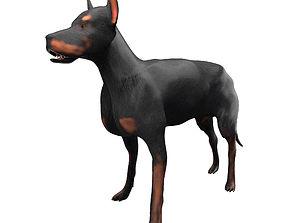 3D model rigged Doberman