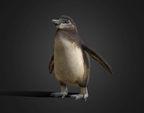 3D model African Penguin Baby - Animated