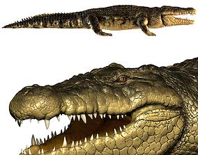 3D model Crocodile dragon