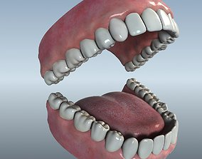 Mouth Teeth Tongue 3D model