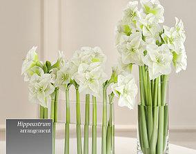 3D Hippeastrum arrangement