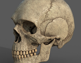 Ancient Skull PBR workflow 3D model VR / AR ready