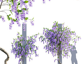Petrea Volubilis - Queen Wreath - 01 3D model
