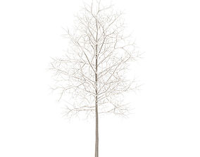 3D model Sugar Maple with Snow 3point3m